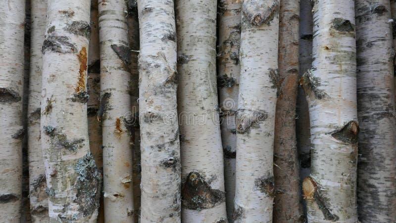 Κορμοί σημύδων για το καυσόξυλο, την ξυλεία οικοδόμησης ή τη διακόσμηση Betula Papyrifera φυσικό δάσος ανασκόπηση&sigmaf στοκ εικόνες