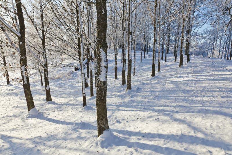Κορμός δέντρων με τον παγετό στοκ φωτογραφία με δικαίωμα ελεύθερης χρήσης