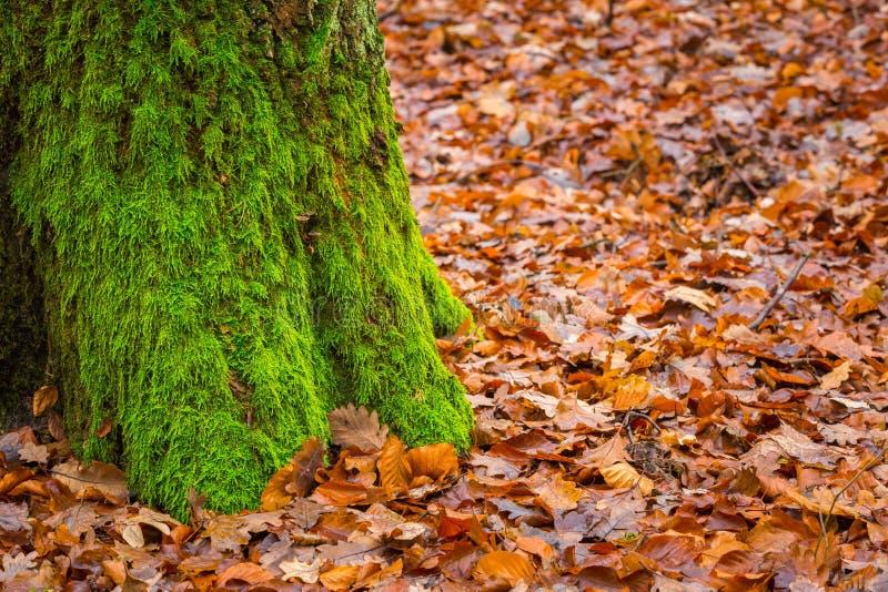 Κορμός δέντρων που καλύπτεται από το πράσινο βρύο στοκ φωτογραφίες