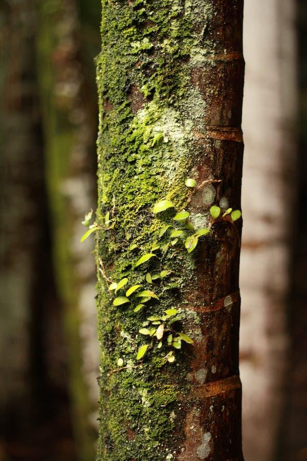Κορμός δέντρων που καλύπτεται στο βρύο στοκ φωτογραφία