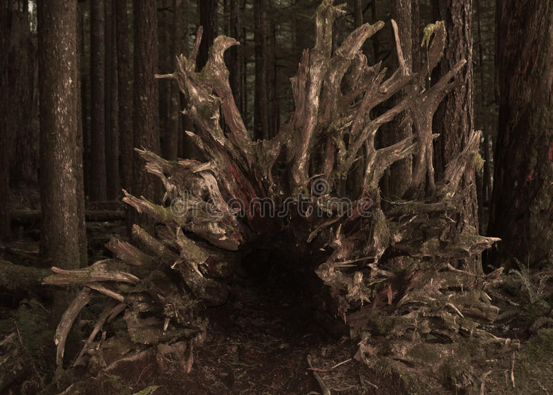 Κορμός δέντρων στο δάσος στοκ φωτογραφία με δικαίωμα ελεύθερης χρήσης