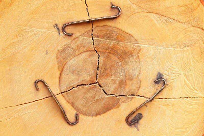κορμός δέντρων αποκοπών στοκ εικόνες με δικαίωμα ελεύθερης χρήσης