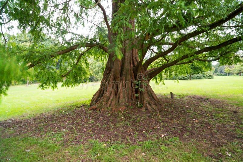 κορμός δέντρων σε ένα πάρκο στοκ εικόνα