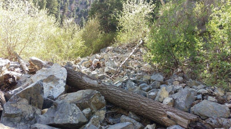 Κορμός και δέντρα δέντρων σε Blockfield στοκ φωτογραφία με δικαίωμα ελεύθερης χρήσης