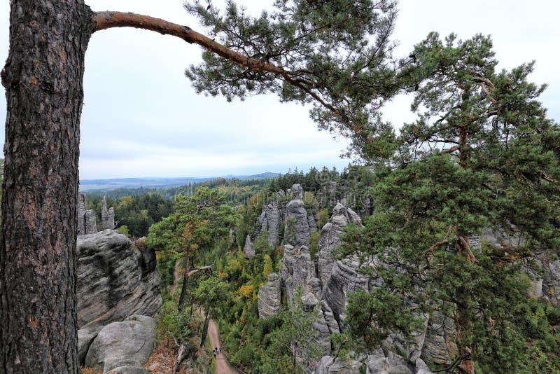Κορμός και κλάδος δέντρων επάνω από τους βράχους άμμου στοκ φωτογραφία με δικαίωμα ελεύθερης χρήσης