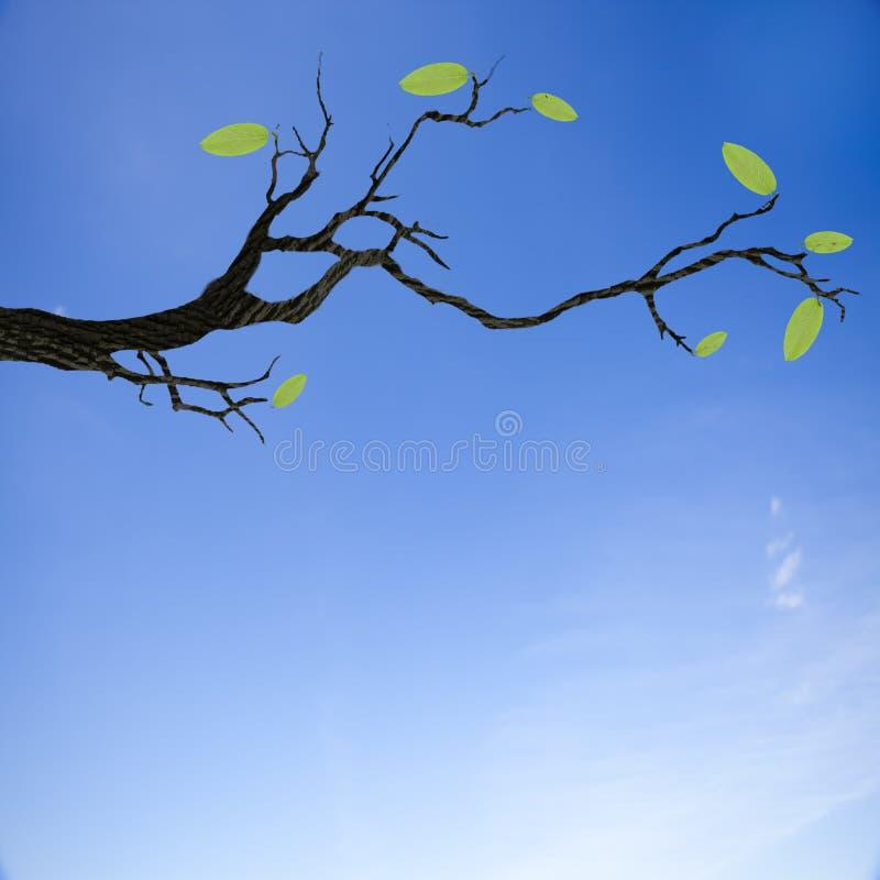 Κορμός με το πράσινο φύλλο στοκ εικόνα με δικαίωμα ελεύθερης χρήσης