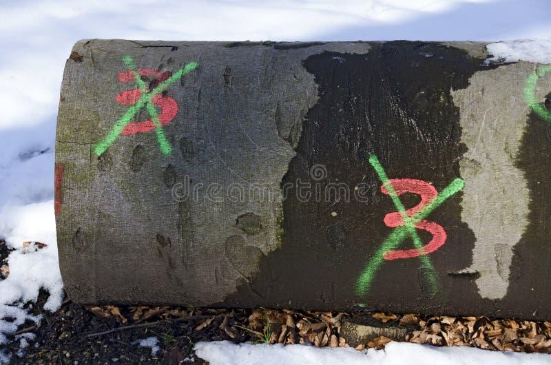 Κορμός με δύο που χτυπιέται μέσω των threes στοκ εικόνες