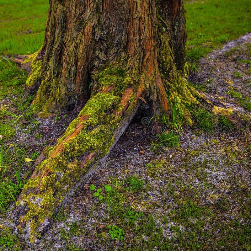 Κορμός της παλαιάς κινηματογράφησης σε πρώτο πλάνο δέντρων πάρκων στοκ φωτογραφία με δικαίωμα ελεύθερης χρήσης
