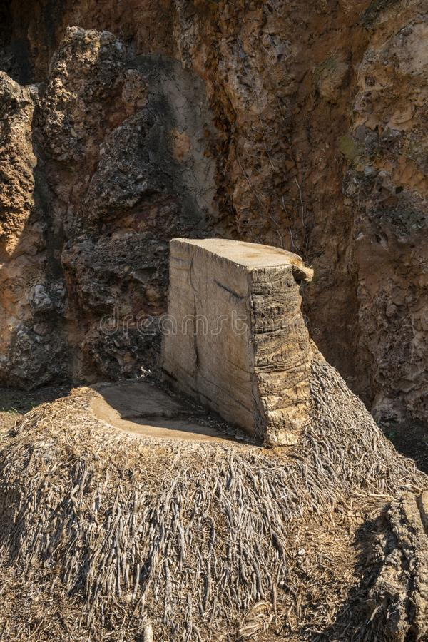 Κορμός του κομμένου φοίνικα στοκ φωτογραφία με δικαίωμα ελεύθερης χρήσης