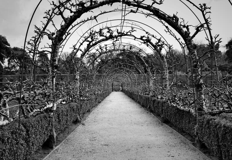 Κορνουάλλη, οι χαμένοι κήποι Heligan στοκ φωτογραφία με δικαίωμα ελεύθερης χρήσης