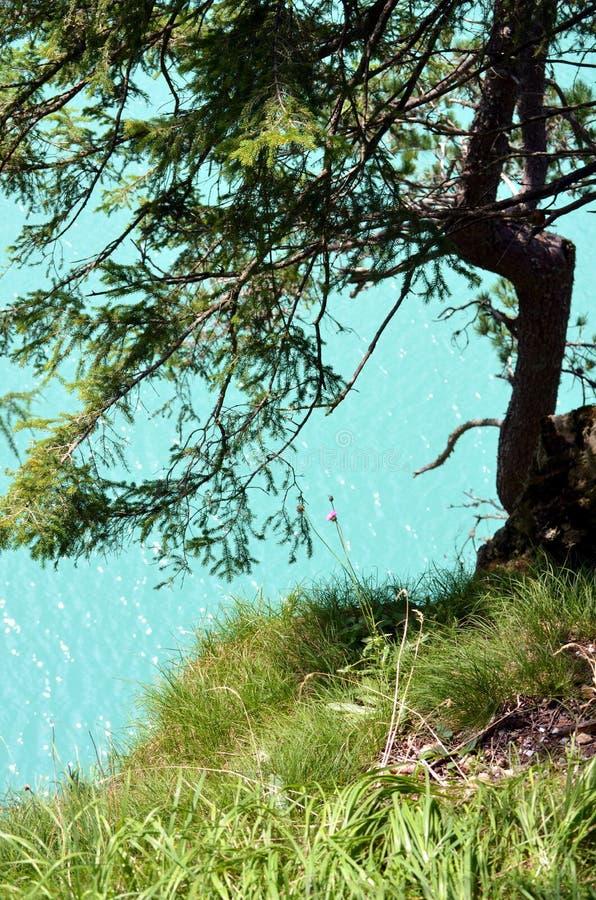 Download κορσικανικά βουνά βουνών λιμνών λάκκας Creno De Γαλλία της Κορσικής Στοκ Εικόνες - εικόνα από ποταμός, φυσικός: 62720630