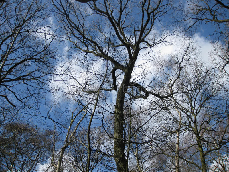 Κορυφές δέντρων την ημέρα ενός ηλιόλουστου χειμώνα στοκ εικόνα με δικαίωμα ελεύθερης χρήσης