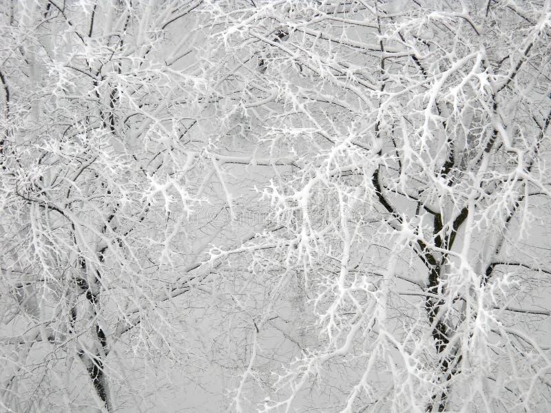 Κορυφή κάτω από την άποψη σχετικά με το χιόνι πέρα από χειμερινά treetops στοκ εικόνες