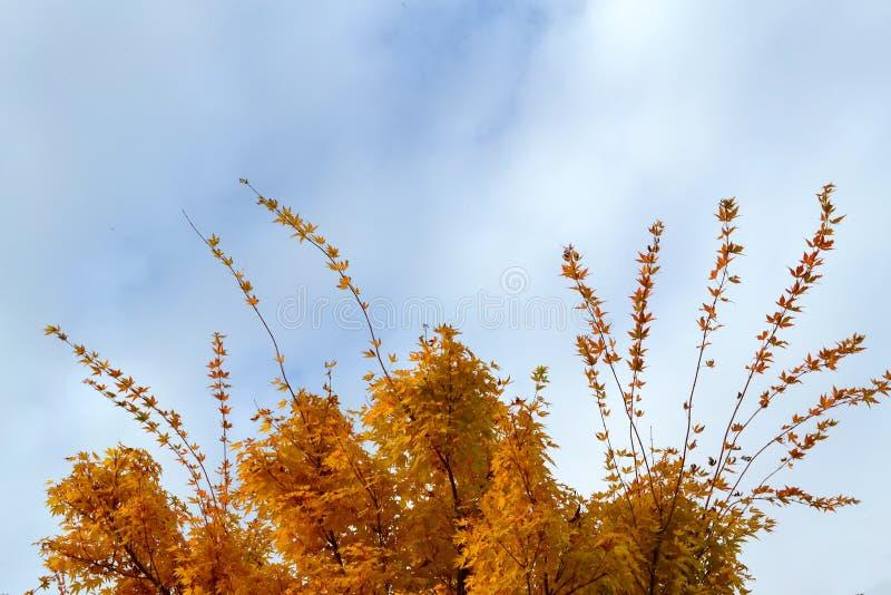 Κορυφή του δέντρου το φθινόπωρο στοκ φωτογραφίες
