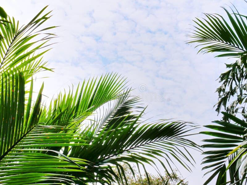Κορυφή φοινίκων ενάντια στον μπλε νεφελώδη ουρανό στοκ εικόνα με δικαίωμα ελεύθερης χρήσης