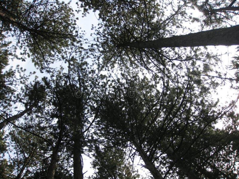 κορυφαία δέντρα στοκ φωτογραφία με δικαίωμα ελεύθερης χρήσης