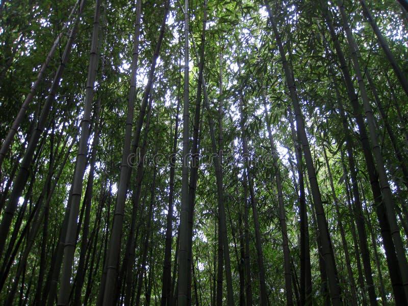 κορυφαία δέντρα στοκ εικόνες