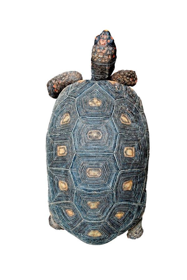 κορυφαία όψη χελωνών στοκ φωτογραφία με δικαίωμα ελεύθερης χρήσης