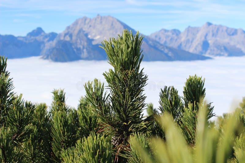 κορυφαίο δέντρο βουνών στοκ φωτογραφίες με δικαίωμα ελεύθερης χρήσης