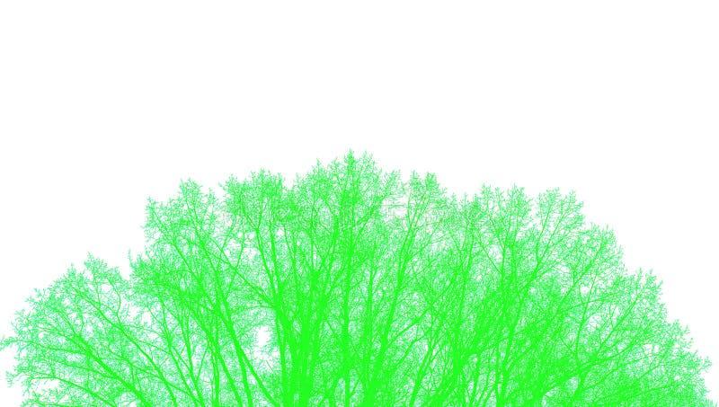 Κορώνα ενός πράσινου δέντρου σε ένα άσπρο υπόβαθρο στοκ φωτογραφίες