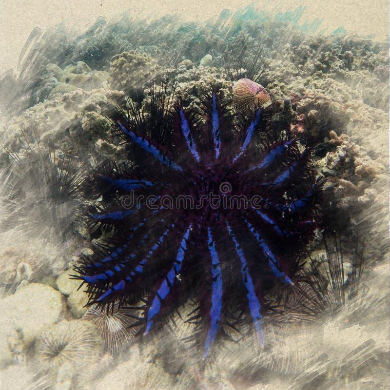 κορώνα seascape αστεριών αγκαθιών της θαλάσσιας ζωής ωκεάνιο υποβρύχιο W ελεύθερη απεικόνιση δικαιώματος