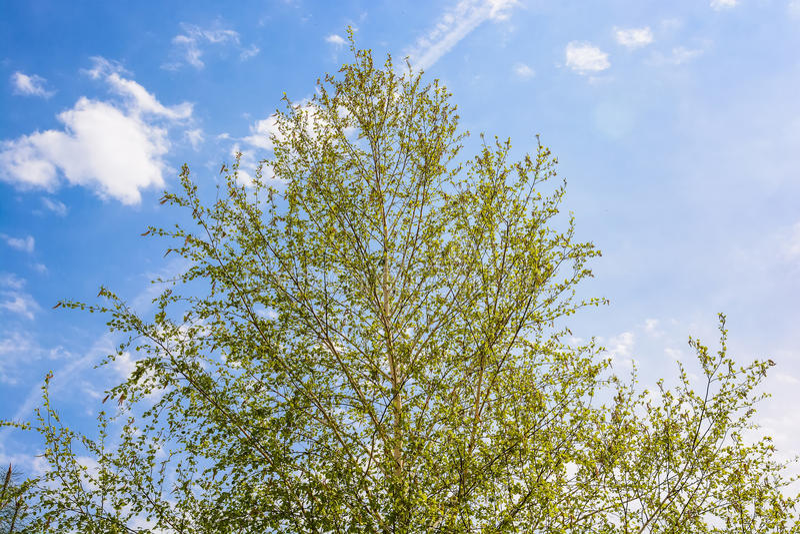 Κορώνες των δέντρων το καλοκαίρι στοκ φωτογραφία