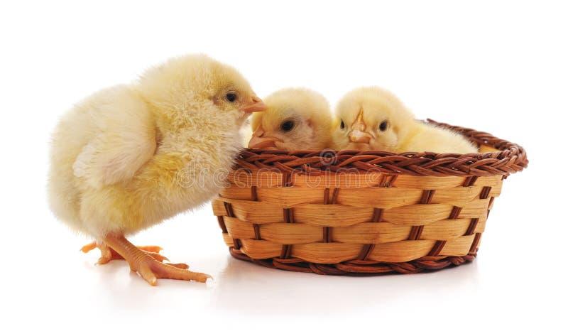 Κοτόπουλα στο καλάθι στοκ φωτογραφίες
