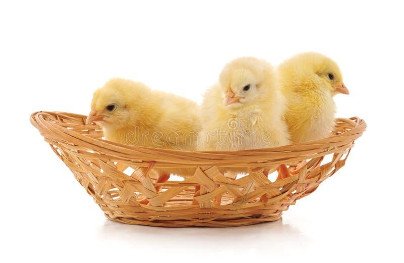 Κοτόπουλα στο καλάθι στοκ εικόνα με δικαίωμα ελεύθερης χρήσης