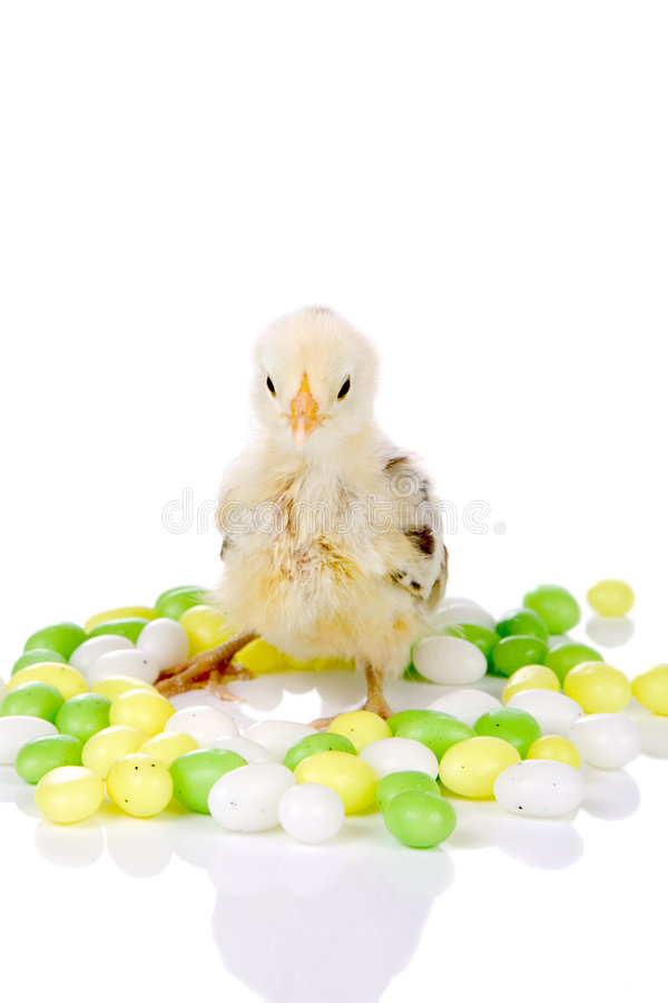 κοτόπουλο καραμελών στοκ εικόνες