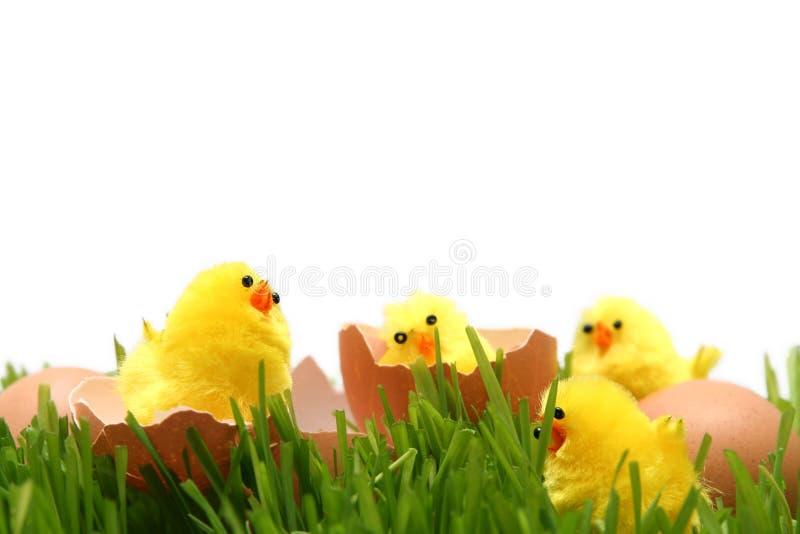 Κοτόπουλο Πάσχας στοκ εικόνα