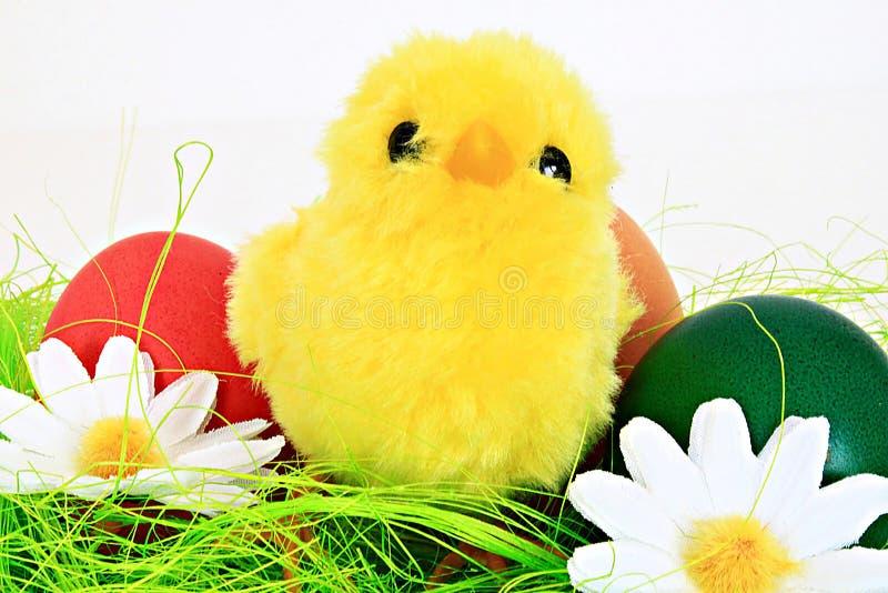κοτόπουλο Πάσχα στοκ φωτογραφίες