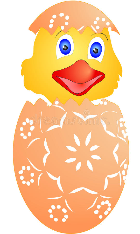 Κοτόπουλο Πάσχας που εκκολάφθηκε ακριβώς από τα αυγά ελεύθερη απεικόνιση δικαιώματος