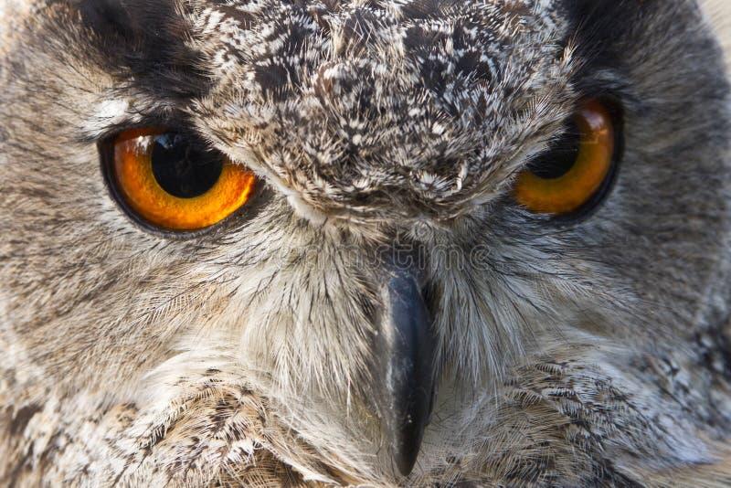 Download κουκουβάγια ματιών αετώ&n στοκ εικόνες. εικόνα από μάτι - 17058070