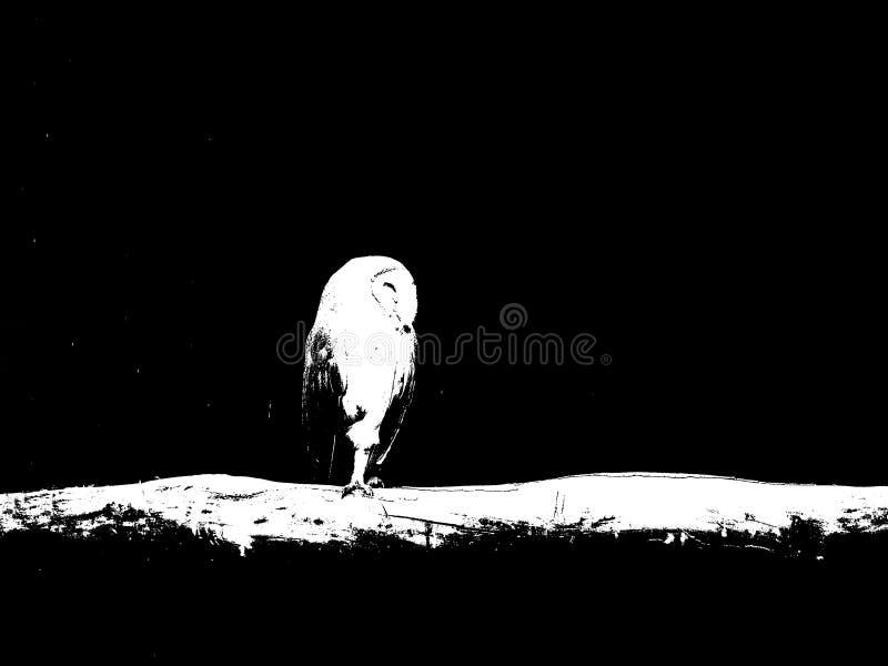 Κουκουβάγια που στέκεται σε ένα πόδι και που κοιμάται στον κλάδο στοκ εικόνες