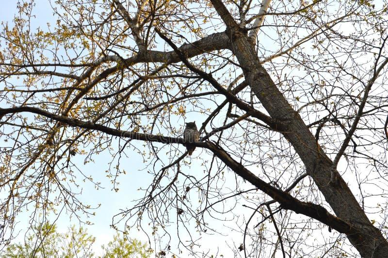 Κουκουβάγια σε ένα δέντρο στοκ φωτογραφίες