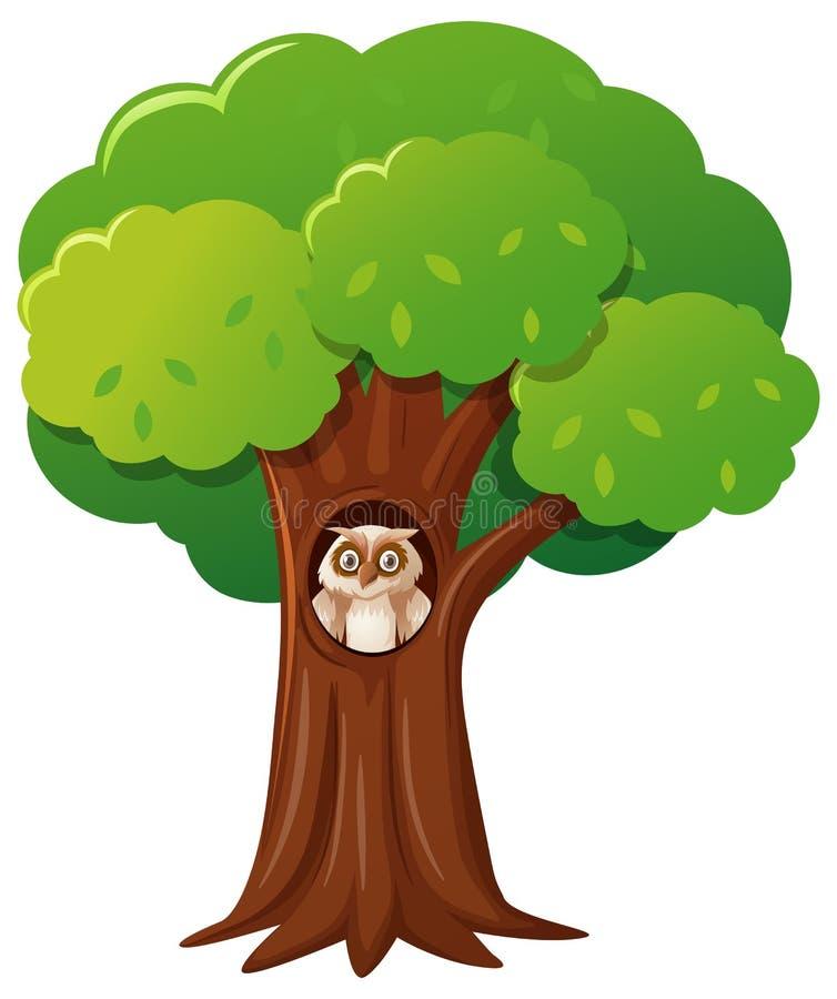 Κουκουβάγια στο κοίλο δέντρο διανυσματική απεικόνιση