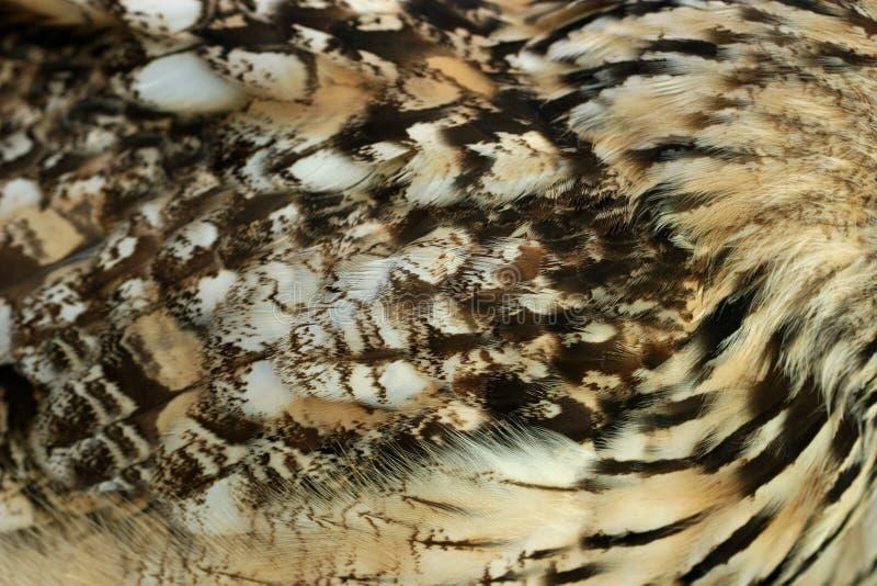 κουκουβάγια φτερών στοκ φωτογραφία με δικαίωμα ελεύθερης χρήσης
