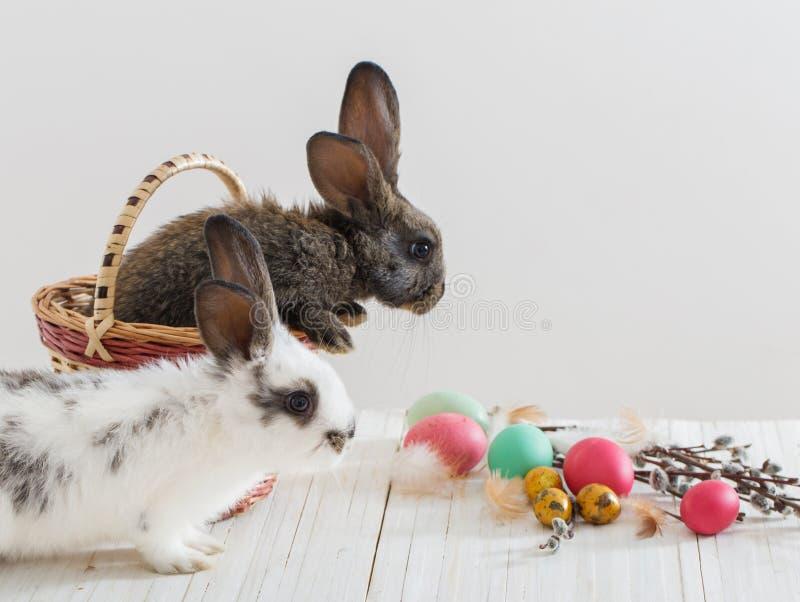 Κουνέλια με τα αυγά Πάσχας στοκ φωτογραφία με δικαίωμα ελεύθερης χρήσης