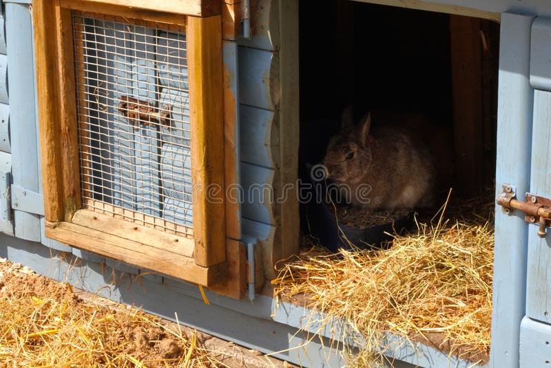 Κουνέλι στο hutch στοκ φωτογραφίες