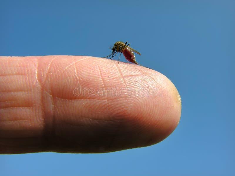 κουνούπι επίθεσης στοκ εικόνα με δικαίωμα ελεύθερης χρήσης