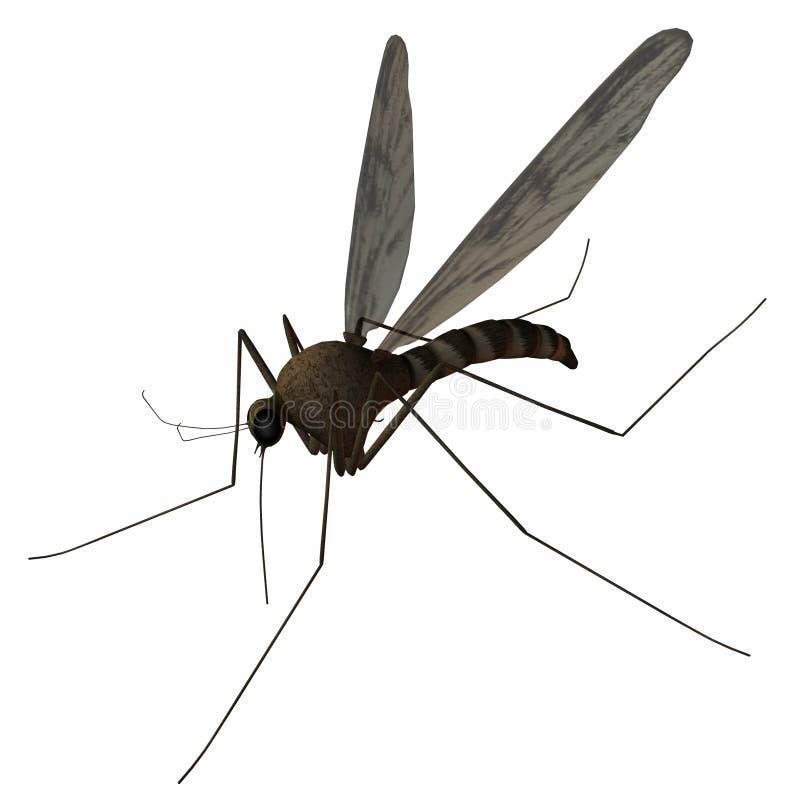 κουνούπι απεικόνιση αποθεμάτων
