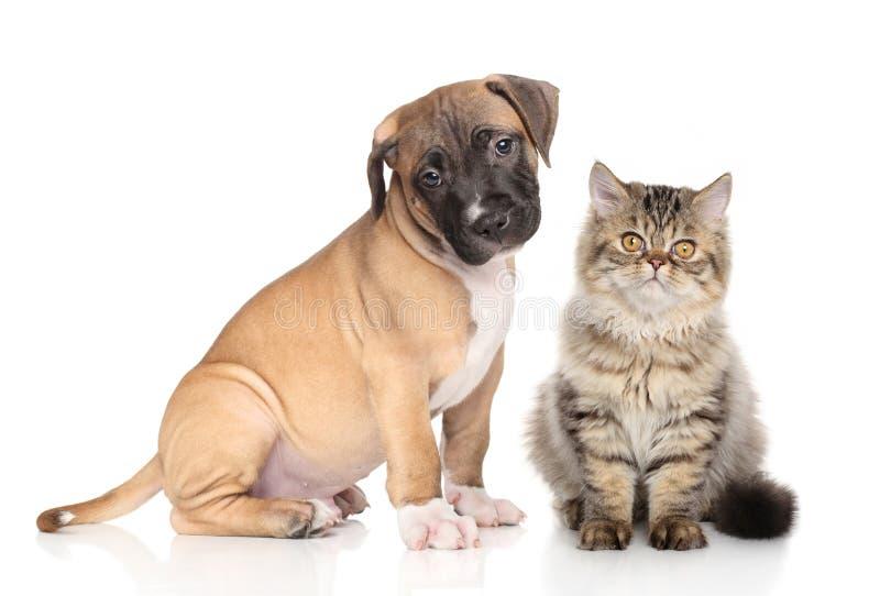 Κουτάβι και γατάκι στο άσπρο υπόβαθρο στοκ εικόνα με δικαίωμα ελεύθερης χρήσης