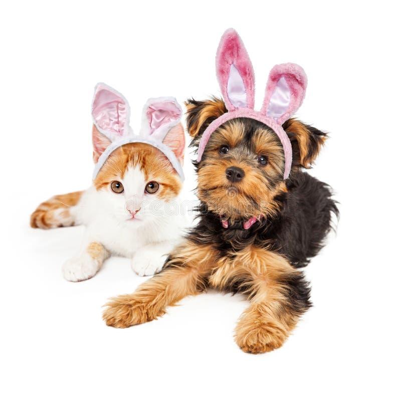 Κουτάβι και γατάκι του Γιορκσάιρ λαγουδάκι Πάσχας στοκ φωτογραφίες με δικαίωμα ελεύθερης χρήσης