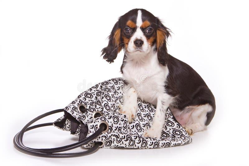 Κουτάβι και τσάντα λαγωνικών στοκ φωτογραφία με δικαίωμα ελεύθερης χρήσης