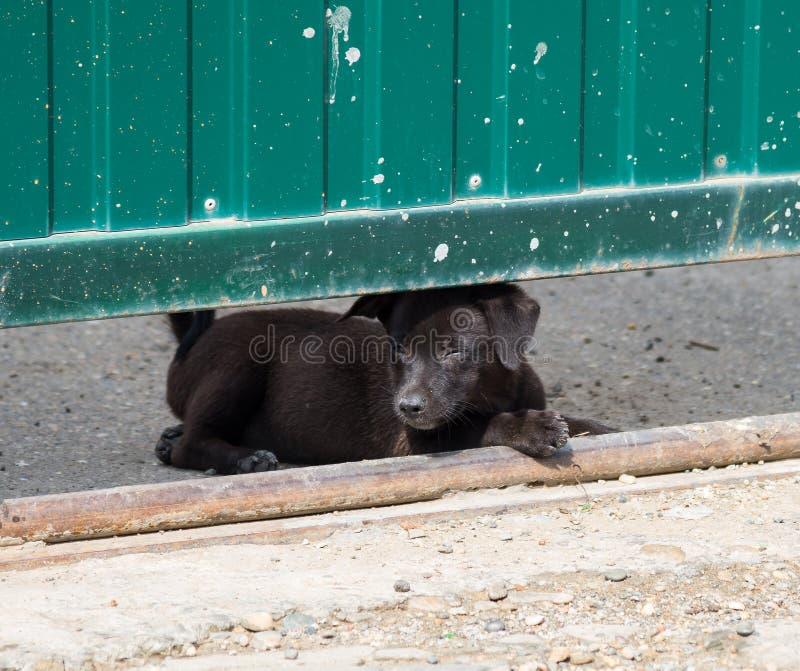 Κουτάβι κοντά στην πύλη στοκ φωτογραφία με δικαίωμα ελεύθερης χρήσης