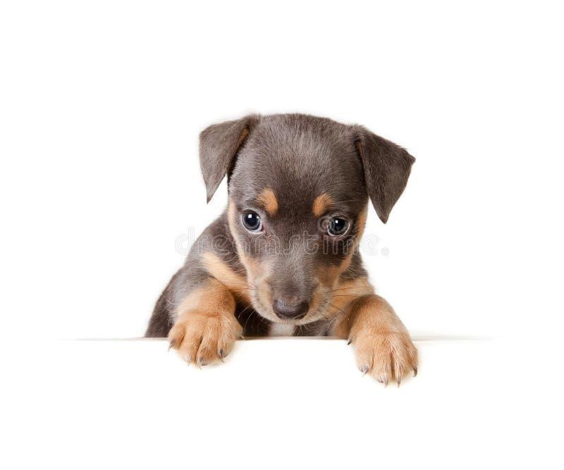 κουτάβι μηνυμάτων σκυλιών στοκ φωτογραφία με δικαίωμα ελεύθερης χρήσης