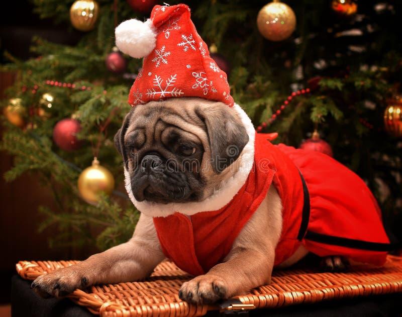 Κουτάβι σκυλιών μαλαγμένου πηλού Χαρούμενα Χριστούγεννας στοκ εικόνες