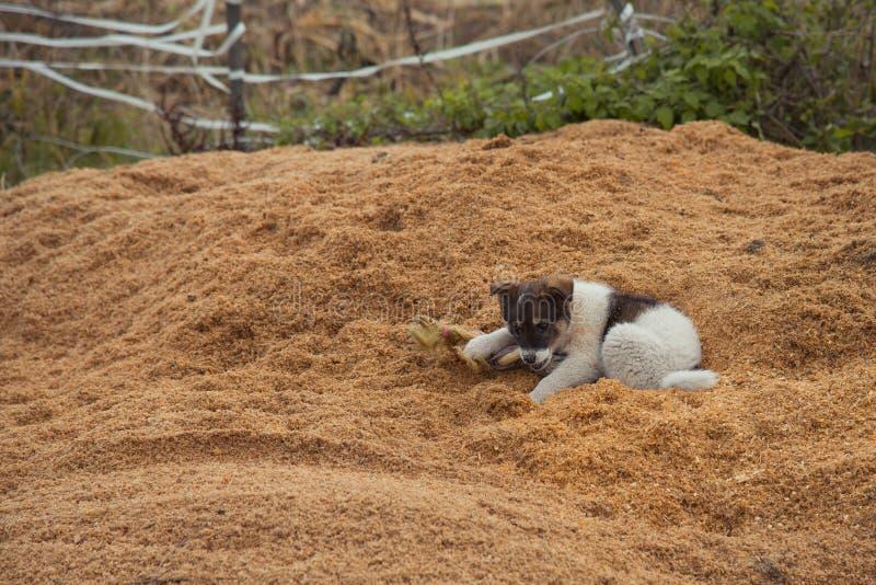 Κουτάβι στο ξύλινο πριονίδι στοκ φωτογραφίες
