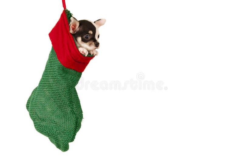 Κουτάβι Χριστουγέννων στοκ φωτογραφίες με δικαίωμα ελεύθερης χρήσης