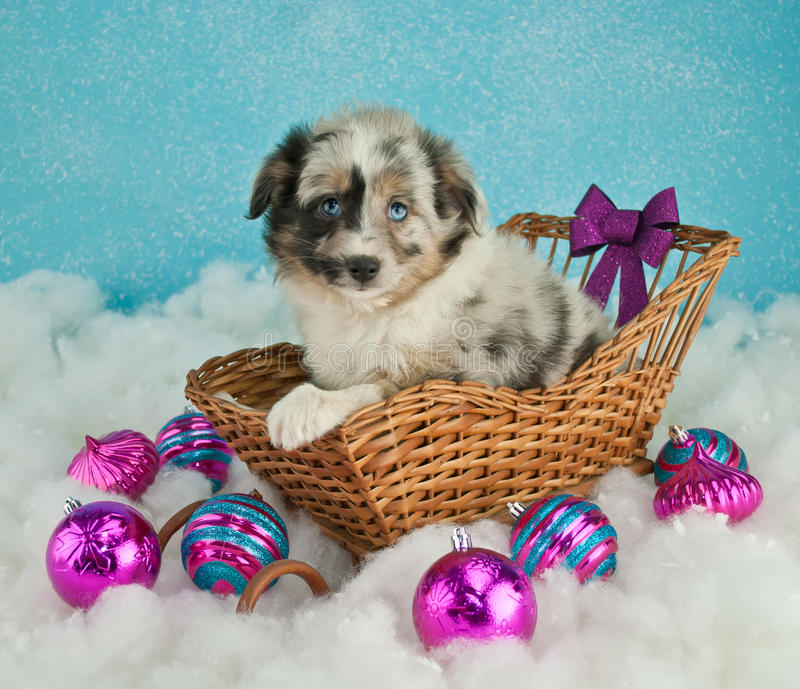Download Κουτάβι Χριστουγέννων στοκ εικόνα. εικόνα από babylonia - 62701093